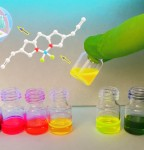 BODIPY derivative fluorescent markers that can attach to diverse biomolecules