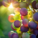 Simple and non-polluting CO2 treatments improve the conservation of table grapes