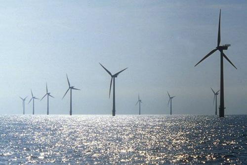 ¿Puede un parque eólico marino ser una amenaza para la biodiversidad?